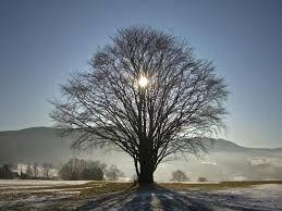 winter solstice 2020 image